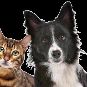 Animali in città Legambiente presenta l'indagine sulla gestione degli animali d'affezione